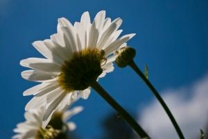 Under Petals2011.