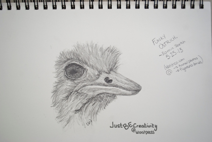 Funky Ostrich. Graphite on Paper. May 25, 2013.